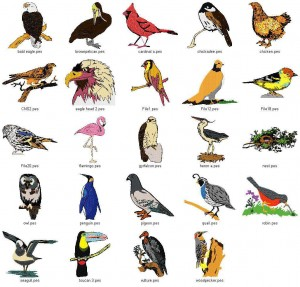 Amazing Facts About Birds